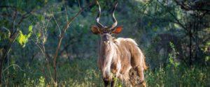 wildlife-of-the-makuleke-pafuri-on-safari